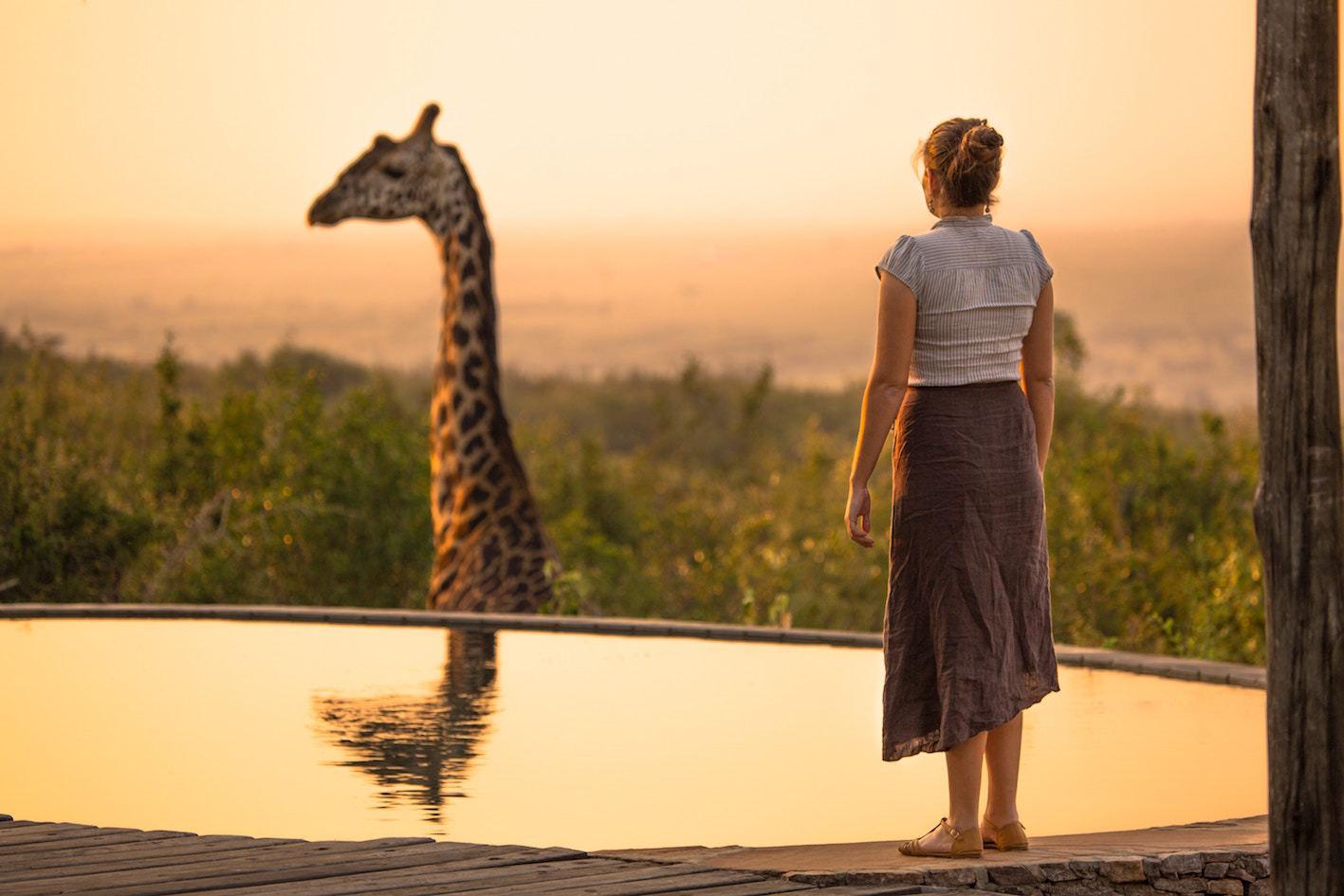 På eventyr med savannens dyr