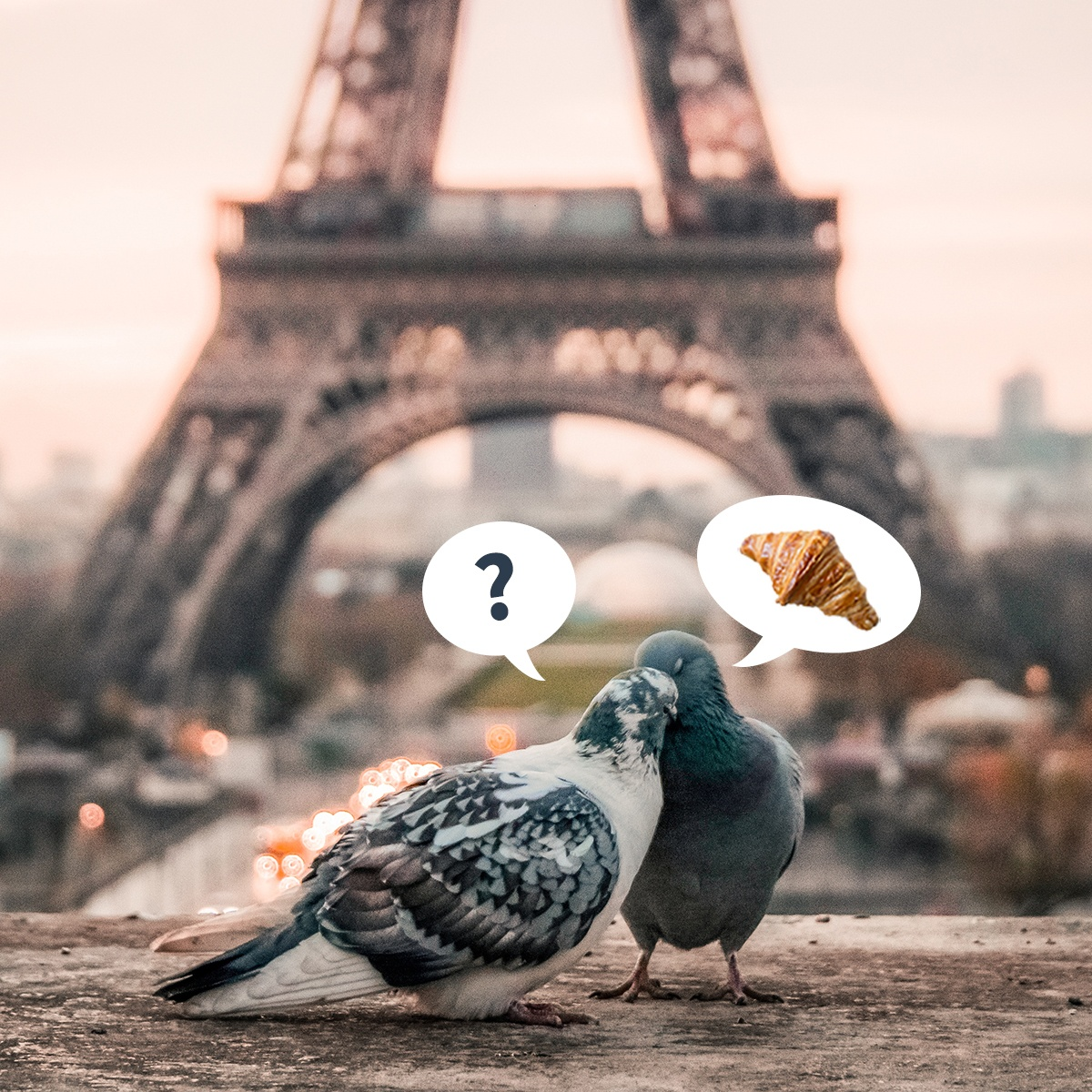 a pigeon couple on a romantic break in Paris