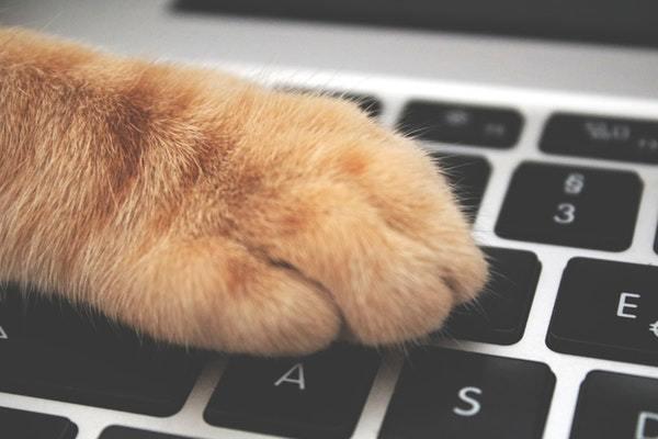 Kat taster på computer